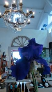 """le comptoir gourmand"" Mirepoix Vin BIO Restaurant"