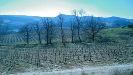 vin Mirepoix