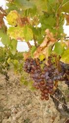"vin BIO "" BIODYNAMIE , restaurant Mirepoix"" cave à vin ariége"
