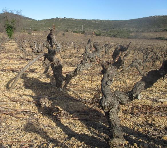 """vin bio cave à vin """" Mirepoix Vin"""""""