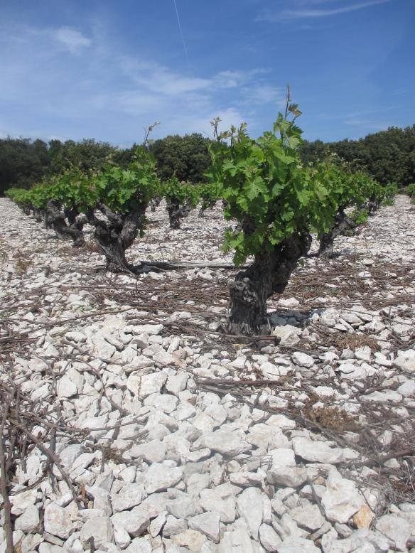 """ Vins Minervois"" "" vin Mirepoix """