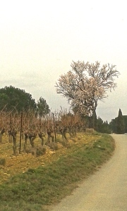 Vin Minervois Parazols